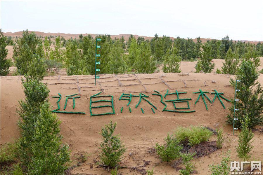 研发种植新技术 荒漠产出绿果实