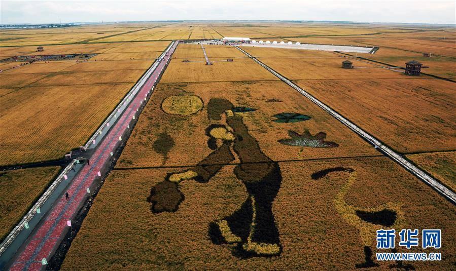 黑龙江富锦市现代农业万亩水稻园丰收在望