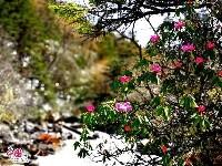 最适合五月去的地方:跑马山上唱情歌