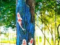 近日,在建设路九原区政府广场以南路段,一棵棵杨树的树干上被画上了一幅幅时尚的彩绘图。