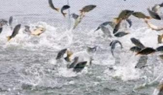 @所有人 包头第九届南海湿地鲤鱼节将于3月31日启幕