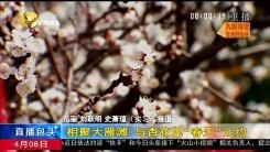 """相聚大雁滩 与杏花的""""春天""""之约"""