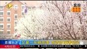又是一年桃花季 花香四溢满包头