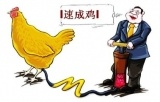 大奖888客户端下载_速生鸡不是激素催出来的