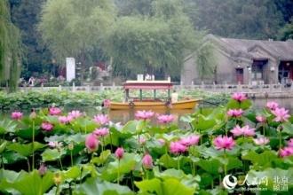 """大奖娱乐888_北京:北海公园再现""""荷花映白塔""""美景"""