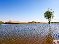 大奖888客户端下载_荒漠引入黄河水 沙海育出新绿洲