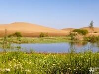 大奖娱乐官方网站_荒漠引入黄河水 沙海育出新绿洲