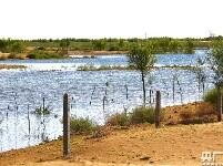 包头新闻网_荒漠引入黄河水 沙海育出新绿洲