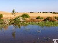 荒漠引入黄河水 沙海育出新绿洲