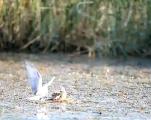南海景区清理湖心岛杂草 裸露砂石地引来鸥类繁殖.mp4