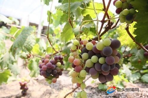 东河区公布特色旅游商品、美食小吃和农副产品名单