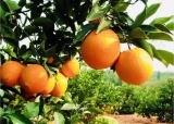 包头品鉴活动,提升助力赣南脐橙美誉度