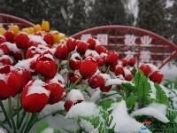 包头下雪啦!