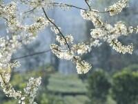 春暖劳作花相伴