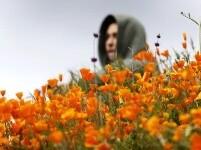春到加州 山花盛放