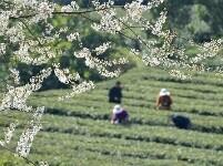 春暖勞作花相伴