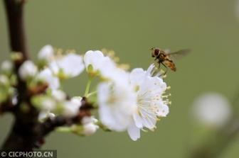 广西柳州:蜂舞春天