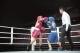 拳击比赛激战正酣