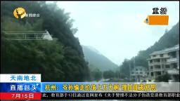 杭州:爷孙偷走价值上万大树,理由匪夷所思