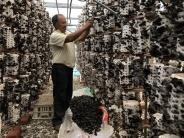 北京幫助中國邊疆少數民族地區加速脫貧