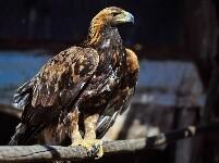 救助野生动物 保护草原生态