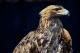 救助野生動物 保護草原生態