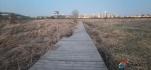 賽汗塔拉城中草原的木棧道該修修了!