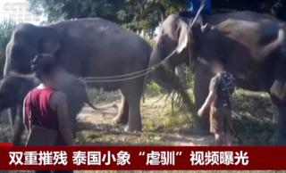 """双重摧残 泰国小象""""虐驯""""视频曝光"""