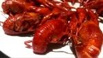 流口水!色香味俱全的麻辣小龙虾