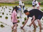 亲子体验稻田插秧